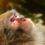 El Horoscopo Chino y los Nacidos en el Año del Mono