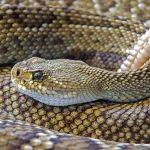 La Serpiente en el horóscopo chino y los 5 elementos
